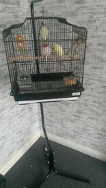 budgie for sale few months old come with cage and food etc