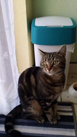Lovely cat for adoption in East Ham-London (Free)