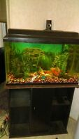Smaller fish tank with stand and fish
