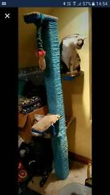 Large cat scratcher