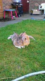 Biscuit and bella need new homes