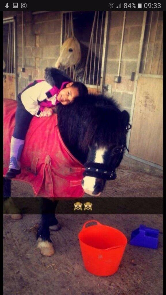 12.1hh pony for sale URGENT**