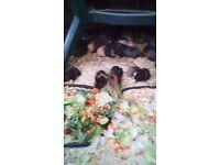 Baby g-pigs boys & girls