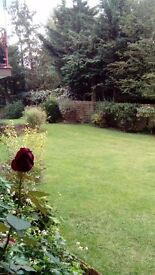 Garden flat to let. Quiet garden flat in cul de sac in Woodside Park N12