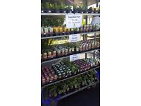 Summer Hanging Basket Plants, Lots of varieties, 75p each, Come and have a look!