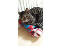 11 month old kitten, boysterous and very affectionate