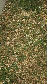 Free Wood Chip, wood chippings