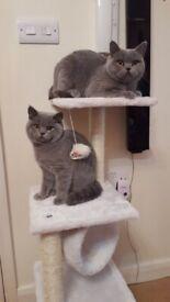 3 x girl left kittens margate kent