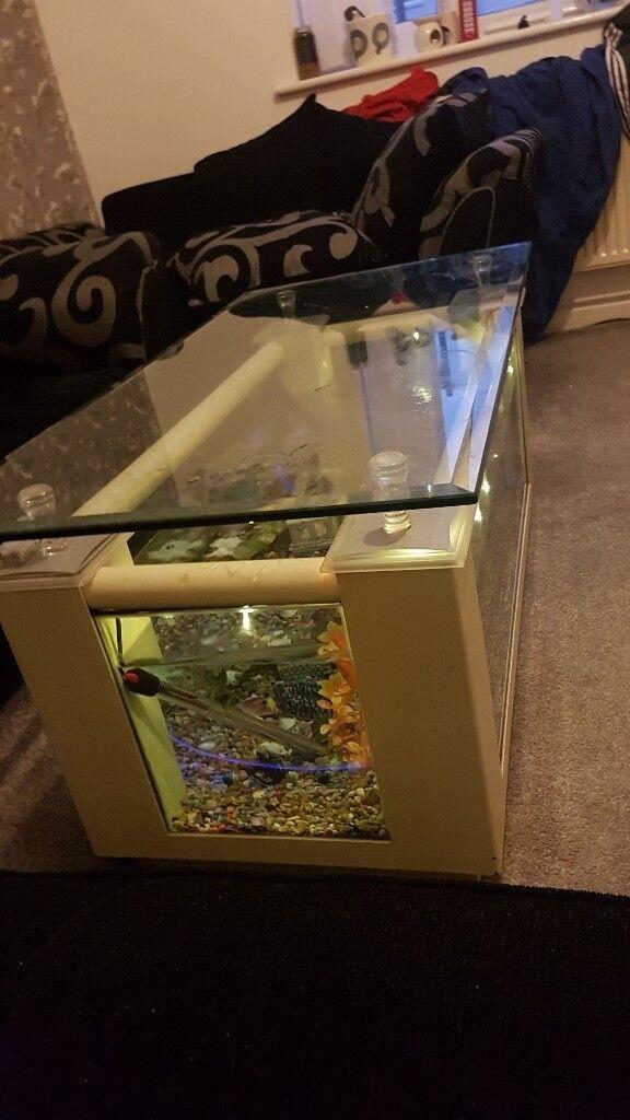 Coffee Table Fish Tank In Washwood Heath West Midlands Gumtree