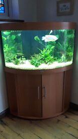 Juwel trigon 190 aquarium