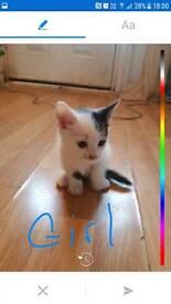 Cat cats kittons