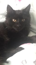 Missing from S8 since Thursday. Ted black long hair make 1 yr old pls help him find his way home