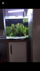 Aqua one fish tank 55L