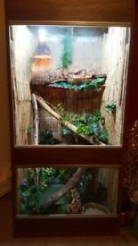 2x Chinese water dragons & full set up