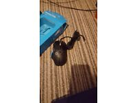 Logitech mouse to sale*New*