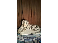 TEDDY TIGER (WHITE BENGAL) LARGE. EXCELLENT CONDITION, DISINFECTED.