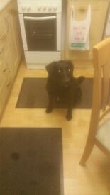 Room urgently required although my dog 2. House trained n only b there to sleep. Have money