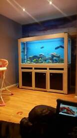 VERY large fish tank aquarium 900 litres