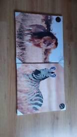 Lion / Zebra Pictures