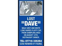 Missing dave, is microchipped please help gef him home