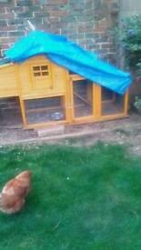Chicken coop and hens