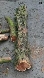 yew log