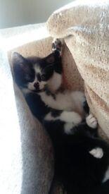 8 black and white kittens
