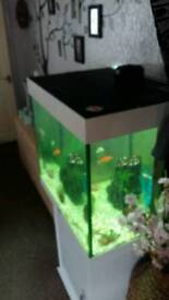 Juwel 200ltr fish tank