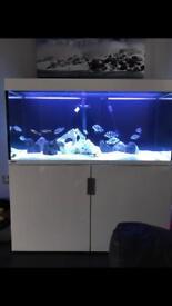 Ehiem incipria 400 gloss white aquarium RRP £1200 beautiful tank