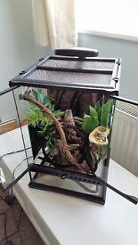 Exo Terrarium - Suitable for Crested Gecko