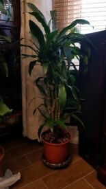 2 beautiful house plants