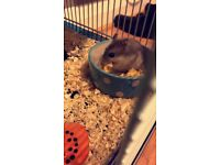 Hamster with cage and accessories