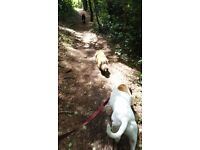 Reliable, Fun & Caring Local Dog Walker - Dog Walking, Visits, Pet Sitting- Pet First Aid Trained