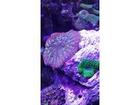 Marine corals for sale