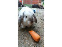 female baby rabbit