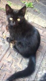 Lovely kittens black kitten