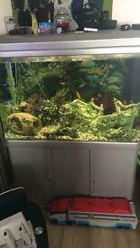 Complete tropical fishtank setup