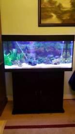 Jewel fish+Fluval 406