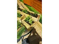 Plants pots troughs planters timber handmade