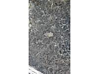 Manure / compost