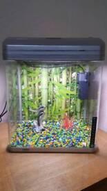 Fish aquarium setup