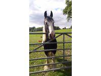 Horse share