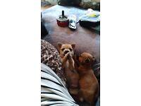 2 lovley puppys