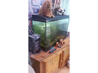 3ft fish tank with two fish