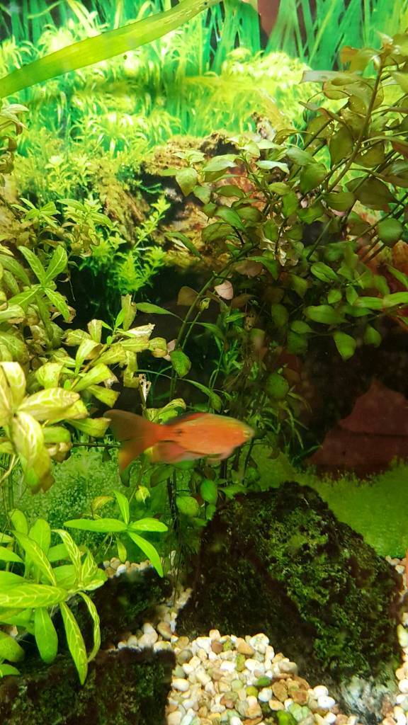 Tropical Fish Rehoming