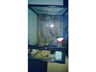 Snake/reptile set up