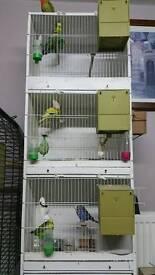 Loads of birds