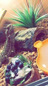 Beaded dragon 2 year old