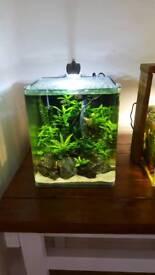Cube fish tank/aquarium