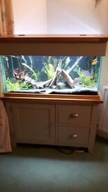 200l fish tank with solid oak cabinet